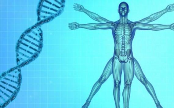 Biologie synthe se e crire premier ge nome humain e1478532725399